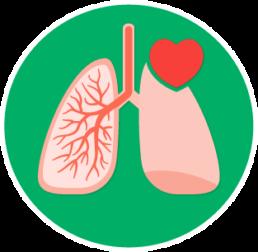 Respiration & circulation